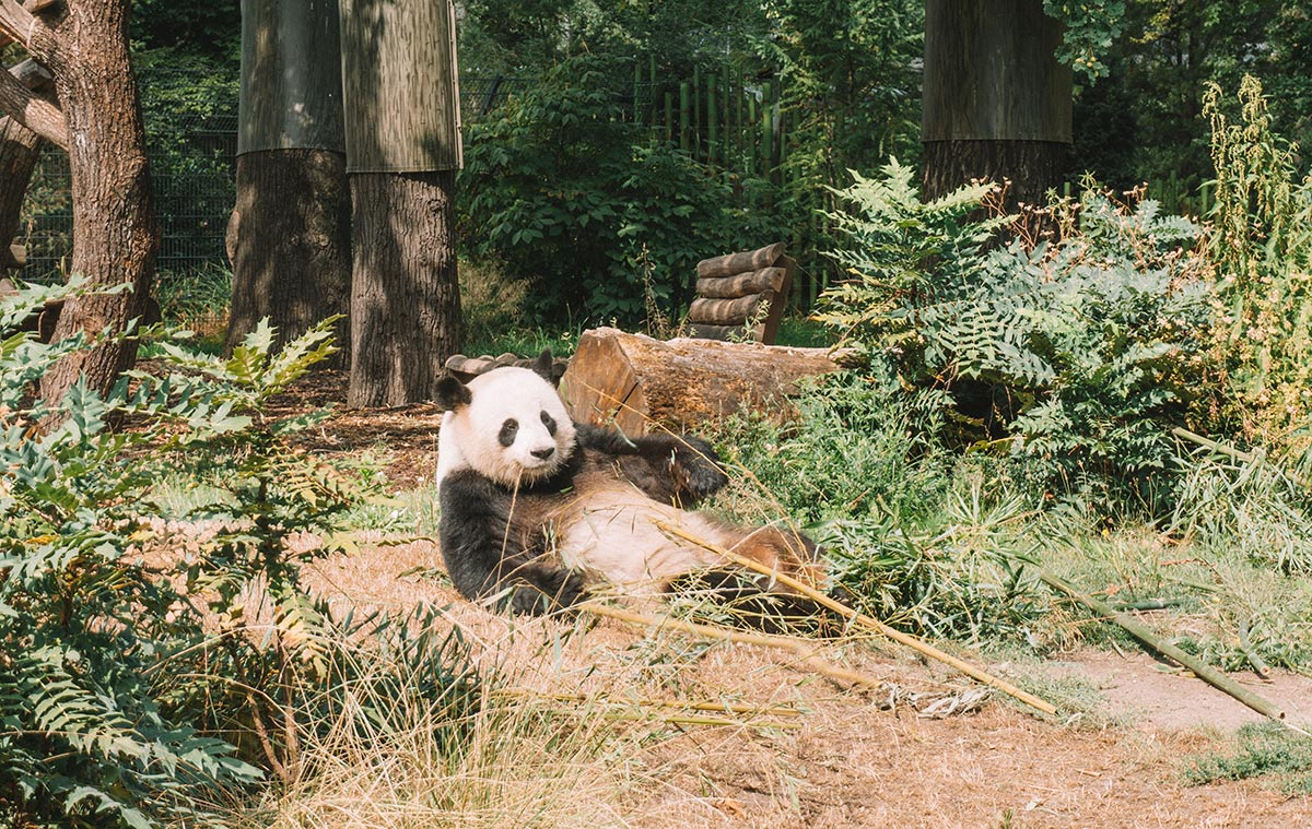 How to spend a weekend in Berlin   Travel Blog   Things to do   zoo
