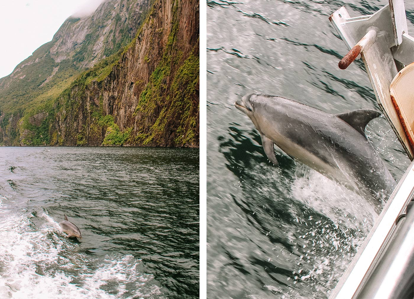 A day trip to Milford Sound, New Zealand blog post dolphins