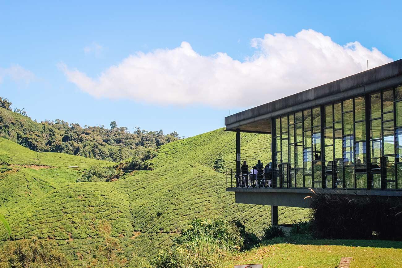 BOH Tea Plantation Cameron Highlands Malaysia itinerary and travel guide