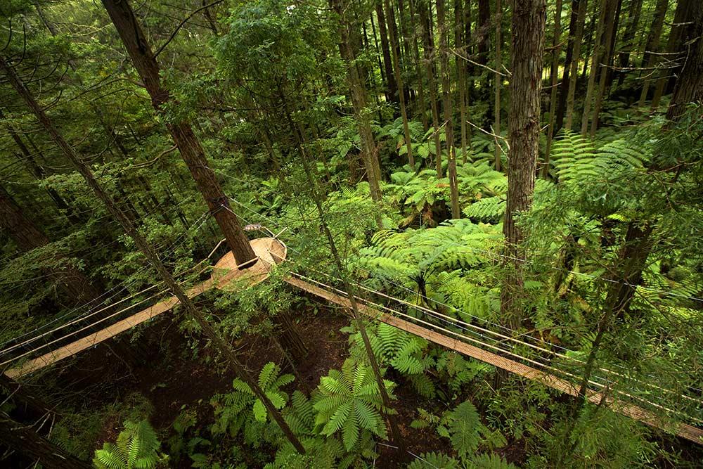 Whakarewarewa Forest - The Redwoods rotorua new zealand